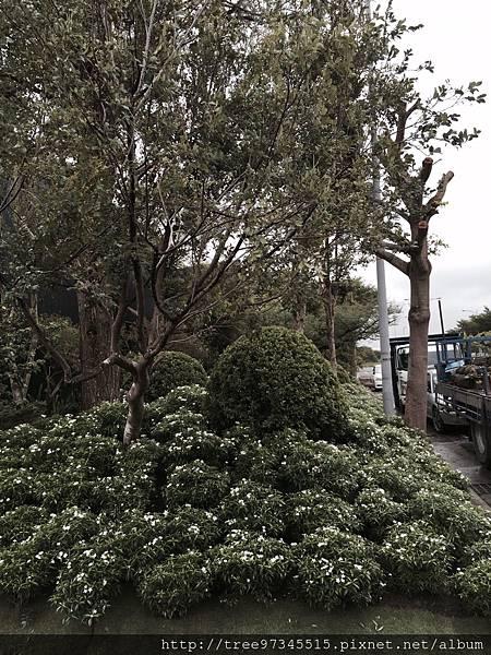 虎尾高鐡景觀工程_170612_0093.jpg