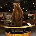 有熊出沒!!