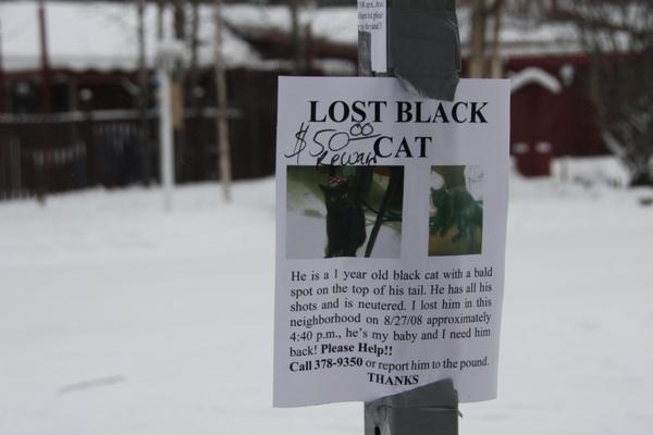 誰看見了我的貓?