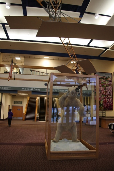 機場大廳, 北極熊的標本(不知道是真的還假的)