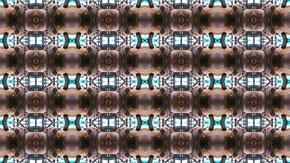 pig_kaleidoscope_290.jpg