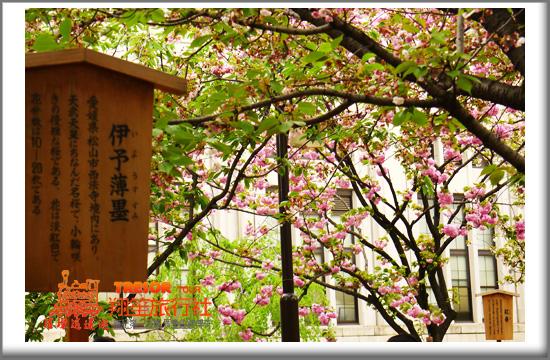 2011造幣局14依予薄墨.jpg