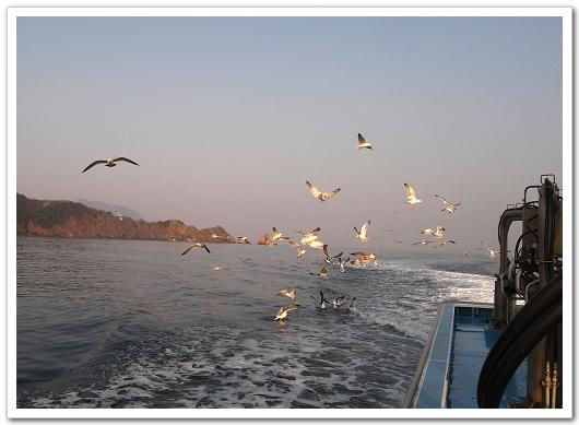 若狹漁師 海鷗搶吃的.jpg