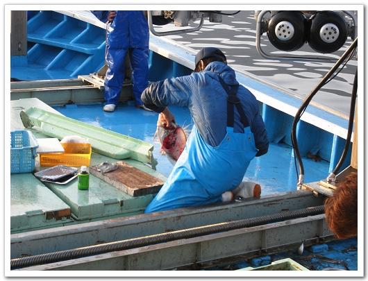 若狹漁師 做生魚片.jpg