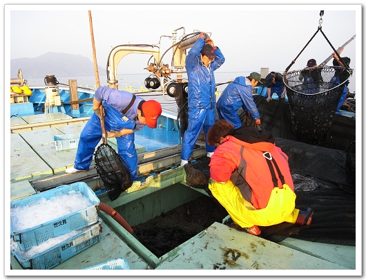 若狹漁師 撈魚1.jpg