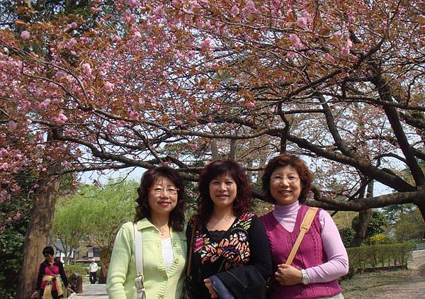 2008.4.23千秋公園殘櫻-02.JPG