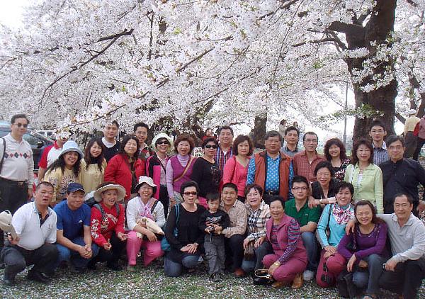 2008.4.23角館櫻花-04.JPG