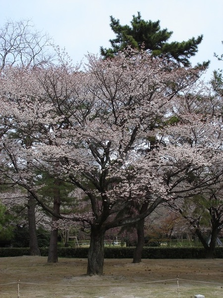 京都御苑.JPG
