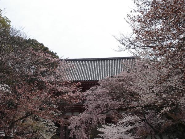 仁王門 櫻花團簇.JPG