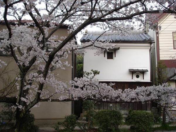花瓣樣的窗戶.JPG