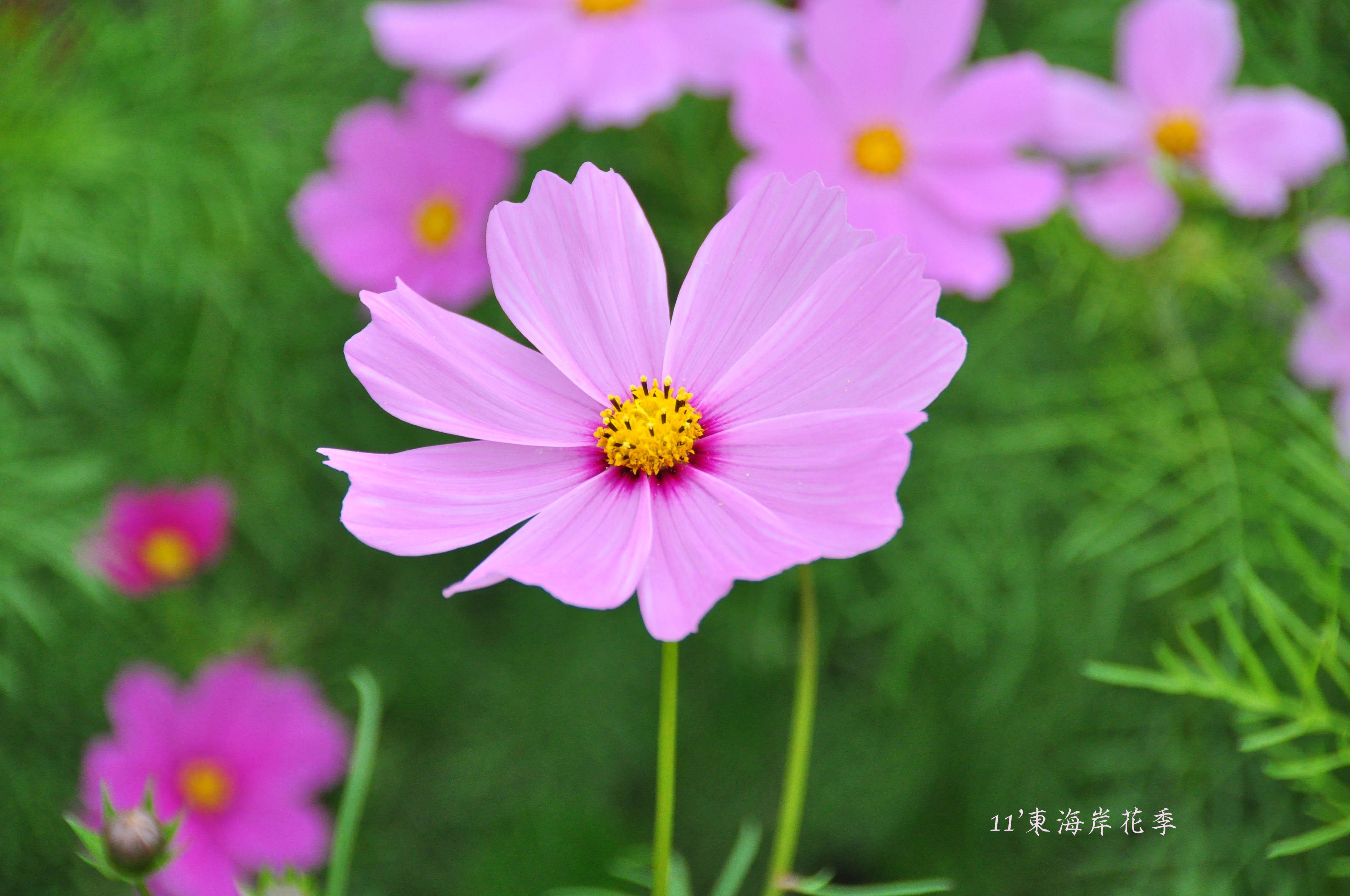 DSC_0200blog.jpg
