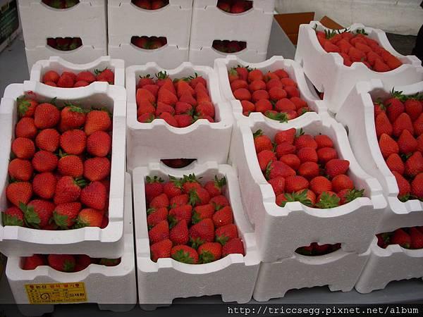 好大顆草莓