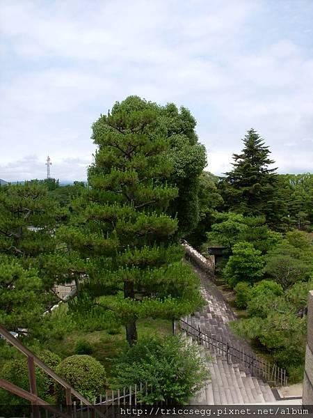 葉子奇特的樹