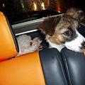 後車箱區的二隻狗