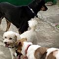 三狗大會串