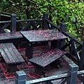 飄落的櫻花佈滿公園裡的木製桌椅