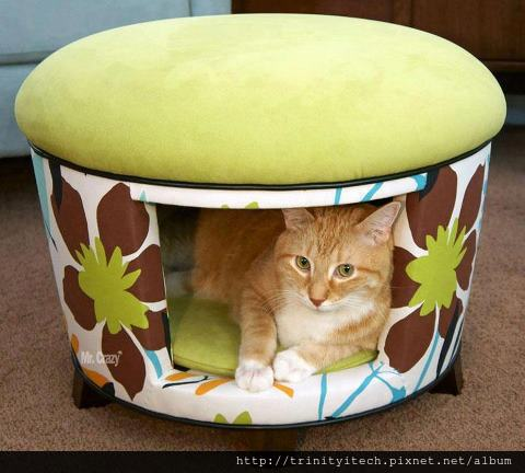 cat's chair