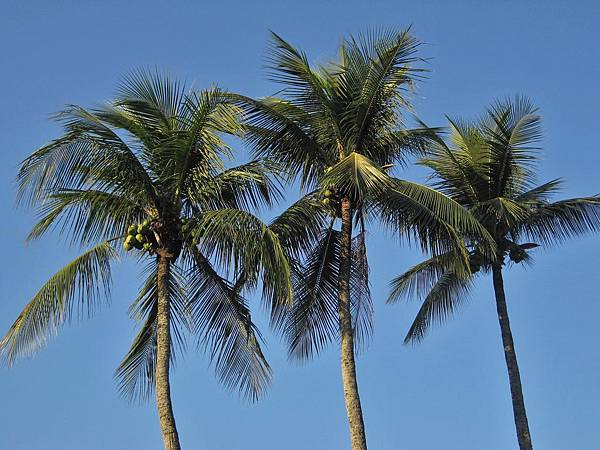 royal-palms-1225858_1920.jpg