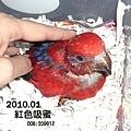 0912紅伶B