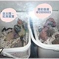 保溫箱裡的的幼鳥睡的好熟