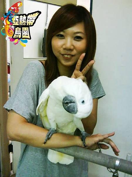 養巴丹鸚鵡的幸福和痛苦是一體兩面