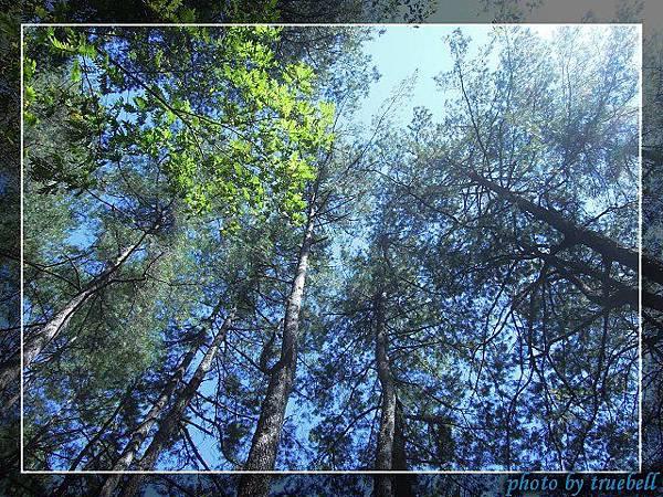 陽光灑落森林