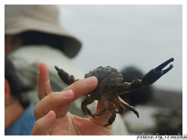 翻翻石頭可以找到螃蟹