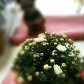 給自己的禮物:白色小菊花