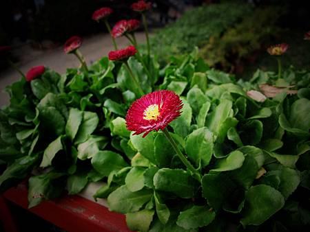 紅色小花.jpg