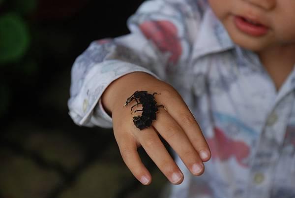 小小蔡與山窗螢幼蟲