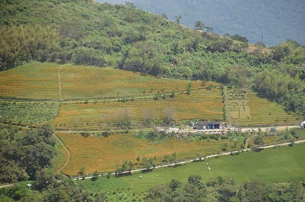 金針山青山農場