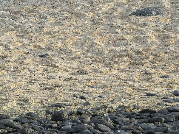 澎湖的沙.jpg