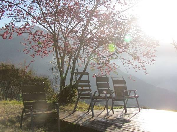 愛和華民宿外的光影與櫻花1.jpg