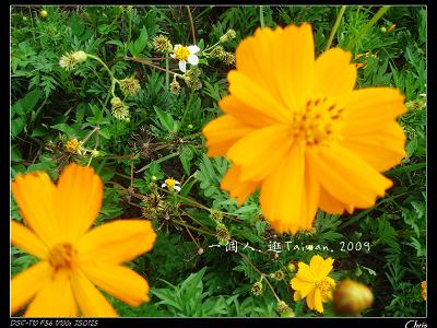 DSC08455.jpg