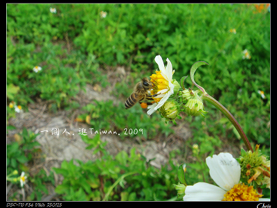 DSC08466.jpg