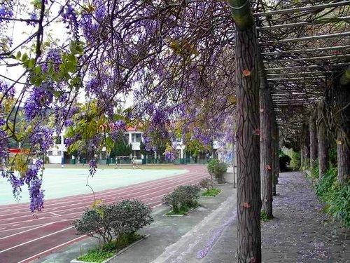 夢幻紫藤9.jpg