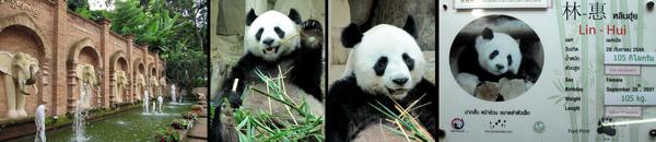 Chiang Mai Zoo.jpg