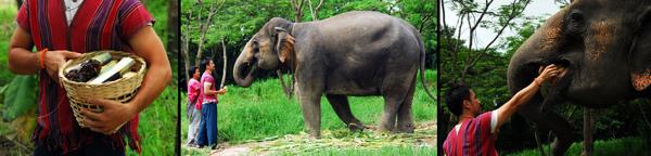 elephant farm-01.jpg