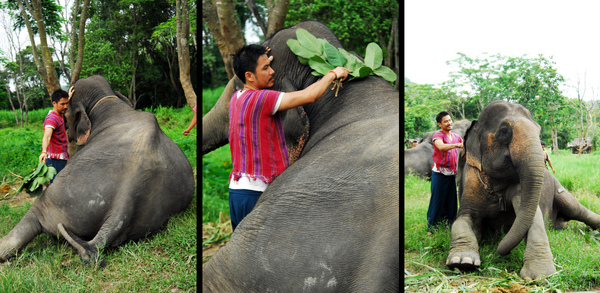 elephant farm-02.jpg