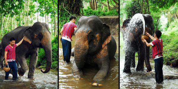 elephant farm-03.jpg