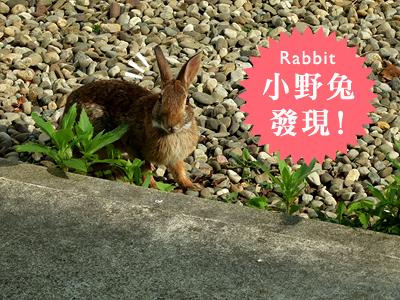 小野兔1.jpg