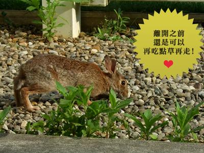 小野兔3.jpg