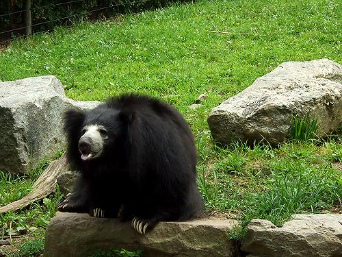 看起來很有喜感的熊。