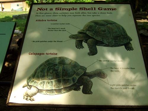 龜品種說明。