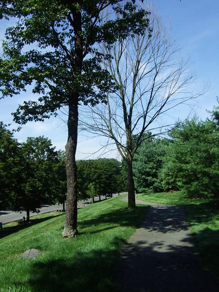 我覺得沒有葉子的那顆樹很好看。