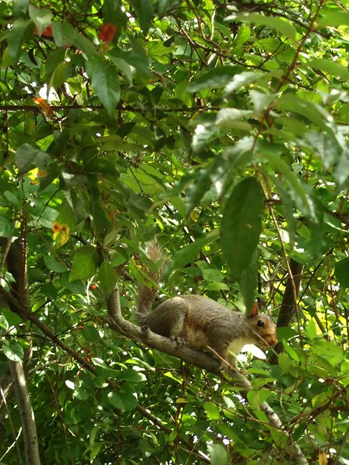 松鼠吃漿果2.jpg