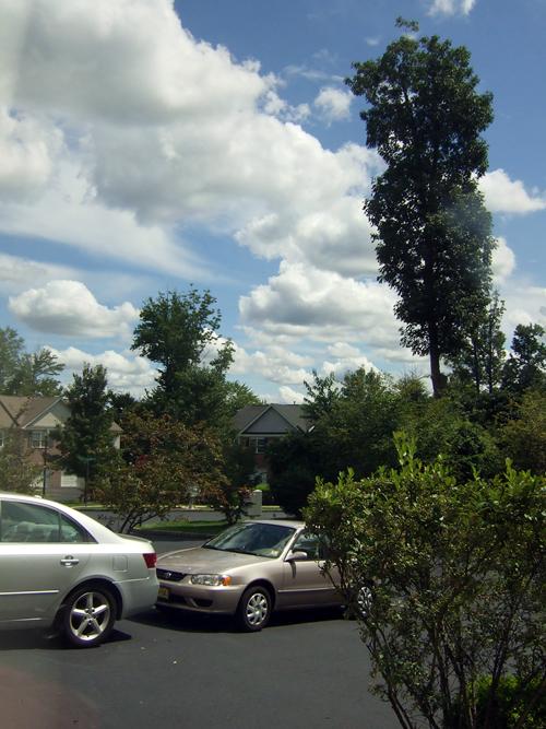 今天天氣好漂亮.jpg