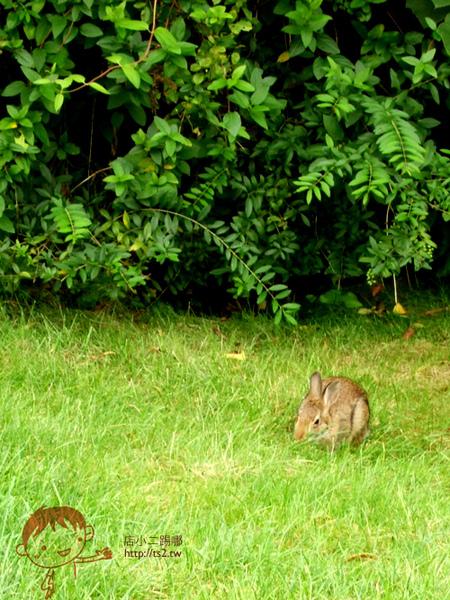 又發現小野兔2.jpg