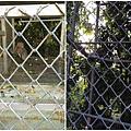 IMG_0836_Fotor_Collage.jpg