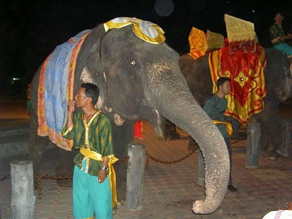 大象耶...